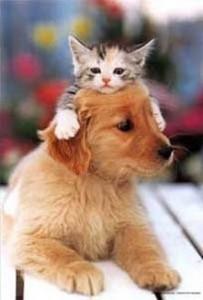 friendscat-dog