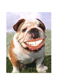 dental20toys
