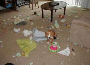 dog-mess