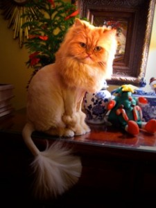 lucy-the-lion-cat