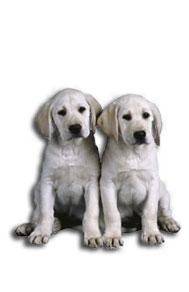 pet-sitter-dogs