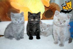 cute-cats_picnik