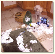 dog-in-garbage