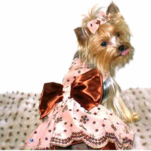dogs-in-fancy-clothing