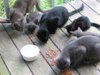 outside-cats-2