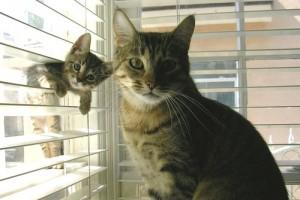 cat-in-blinds