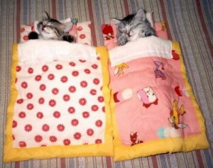 cats-in-bed