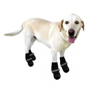 dog-boots