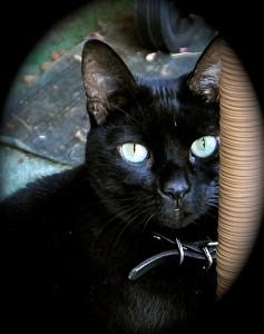 Mollie, our older cat