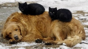 dog-with-cats-on-back