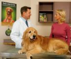 vet-with-dog