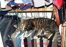 cat-closet