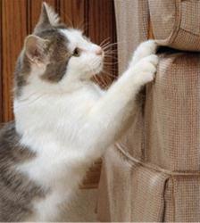 cat-scratching