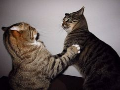 cat-fight-2