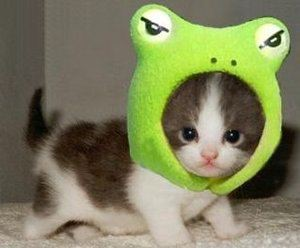 cat-with-green-frog-head