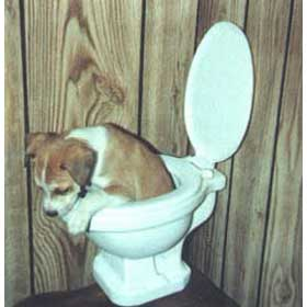 dog-in-toilet
