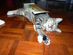 cat-in-box-4-use