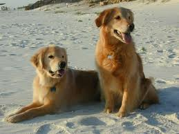 dogs-at-the-beach