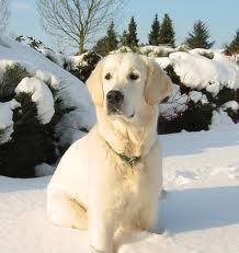 cold-dog
