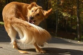 dog-chasingtail