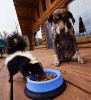 skunk-and-dog