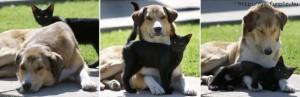 dog-and-cat-polina