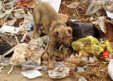 dog-garbage