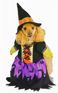 dog-witch