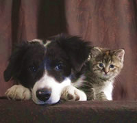professional-dog-and-cat-picture