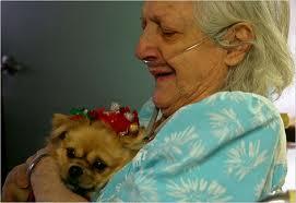 dog-patient