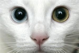 Turkey Cat Culture