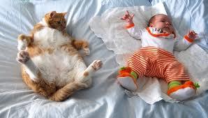 cat-baby
