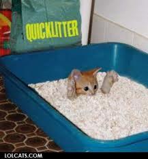 cat-buried-in-litter