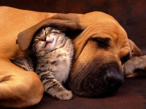 family-dog-cat