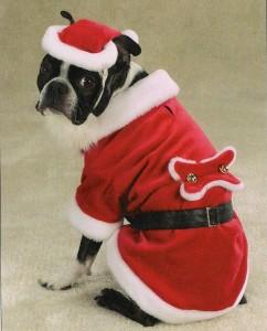 santa-dog