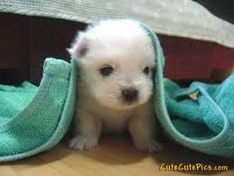 very-cute-puppy