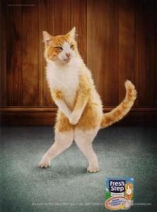 cat-pee1