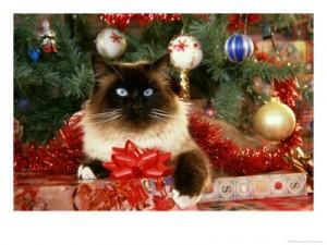 cat-tree-toy