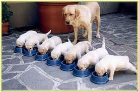 dog-puppies