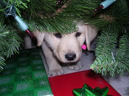 puppy-tree