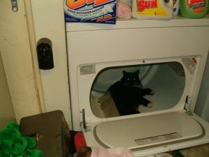 cat-dryer