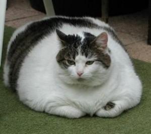 cat-fat