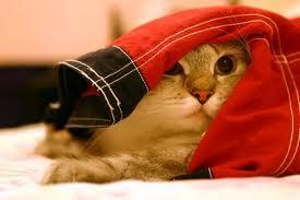 cat-frightened
