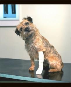 dog-broken-leg