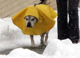 dog-cold