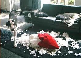 dog-destroying