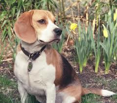 dog-lost