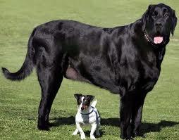 large-dog-small-dog