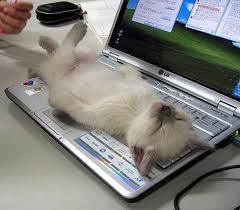 cat-keyborad
