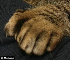 cat-six-toes
